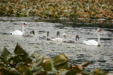 Abbott Marshlands: Delaware and Raritan Canal State Park Towpath – Duck Island
