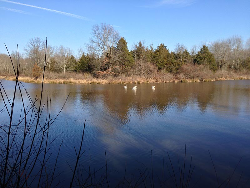 Stony Brook-Millstone Watershed: Main Reserve