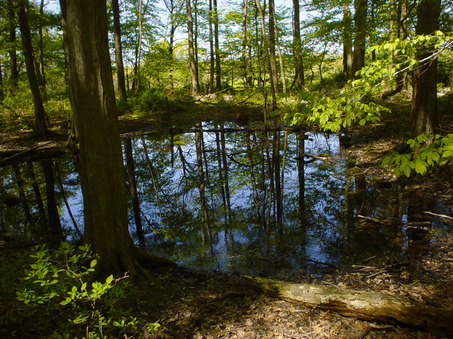 Stony Brook-Millstone Watershed: Mount Rose Trails