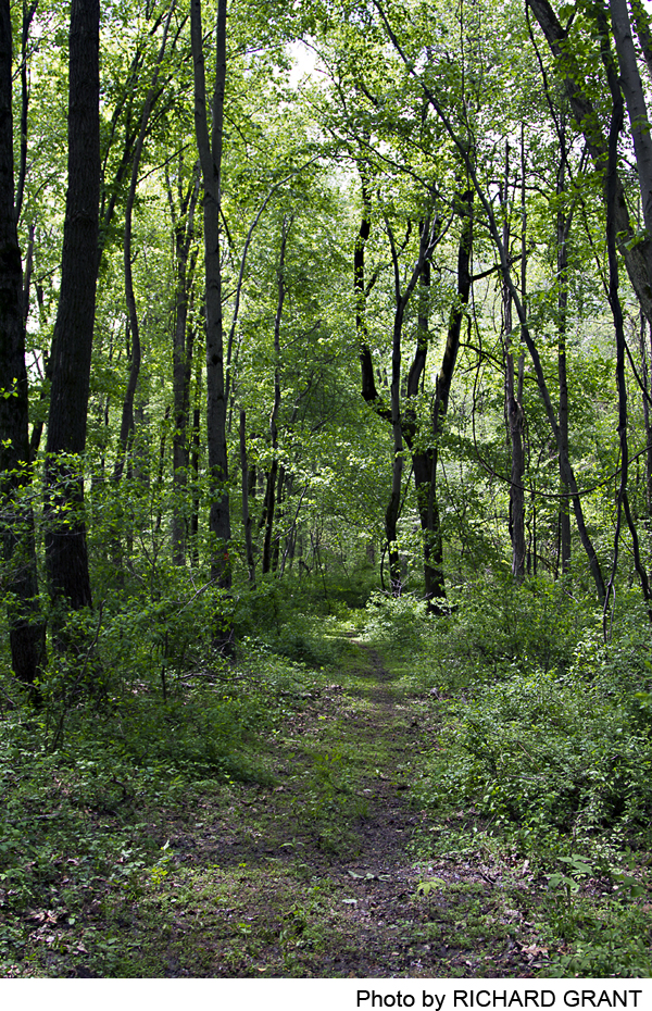Omick Woods at Rocktown Preserve